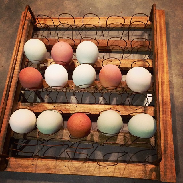 Egg factory!